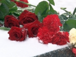 Roses on Snow - Vyborg.TV